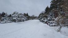 blizzard3